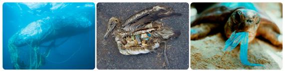 poluição4.jpg